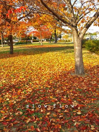 公園紅葉12