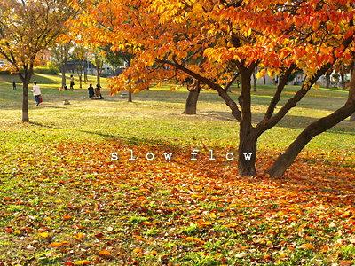 公園紅葉13