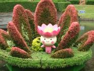 千葉市。妖精の住む花オオガハス
