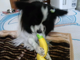 バナナちゃん。