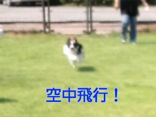 空中飛行!!