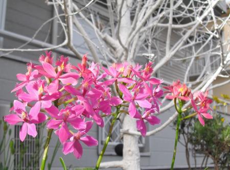 今日のお花 1_convert_20110502224717