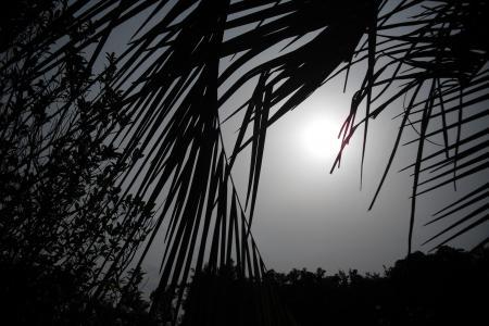 ズーラシア 太陽_convert_20110504225238