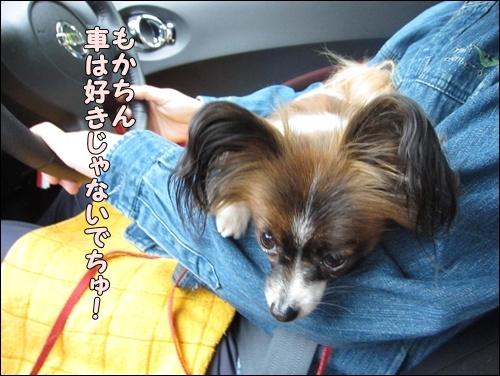 001kuramoka1_20110503193225.jpg
