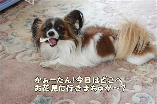 015kuramoka1_20110414225027.jpg