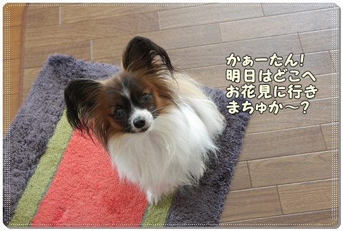 018kuramoka1_20110413232433.jpg