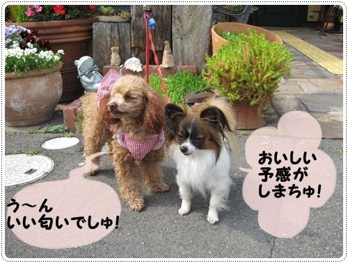 035kuramoka1_20110501142700.jpg