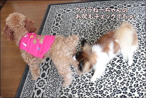 036kuramoka1_20110417111300.jpg
