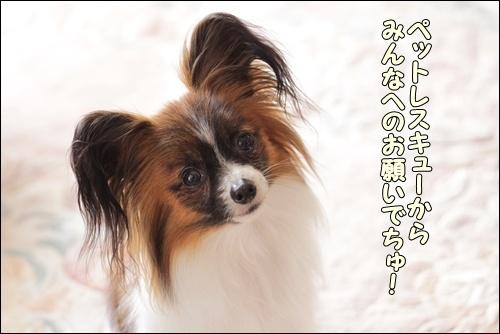 036kuramoka1_20110421161245.jpg