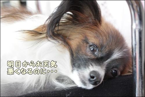 040kuramoka1_20110414225025.jpg