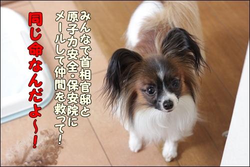 076kuramoka1_20110421161244.jpg