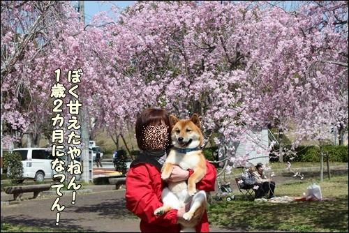 106kuramoka1_20110412161539.jpg