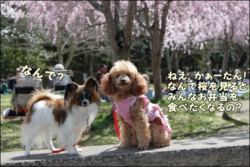 115kuramoka1_20110412161539.jpg