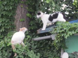 猫の鳴き声がした方を見ると