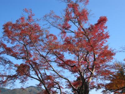 箱根、強羅公園の紅葉
