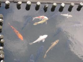 熊本城わきの坪井川