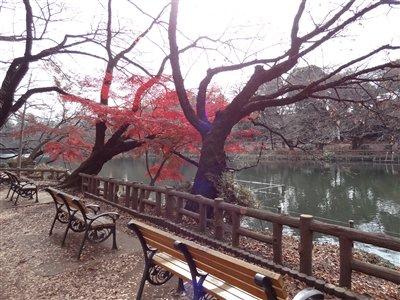 井の頭公園・紅葉1
