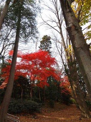 井の頭公園・紅葉3