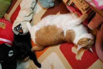 大きい猫!