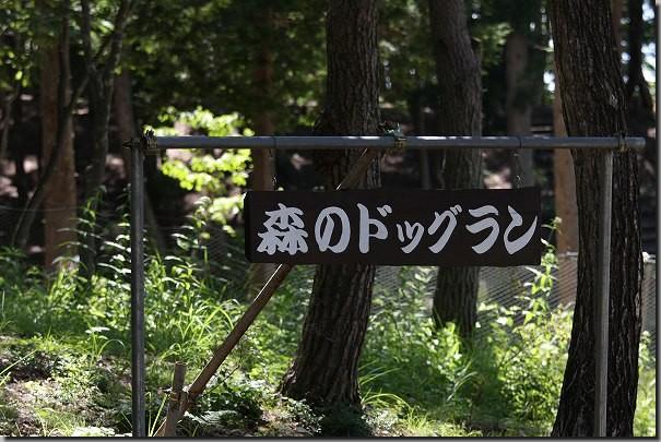 まきばの森 096