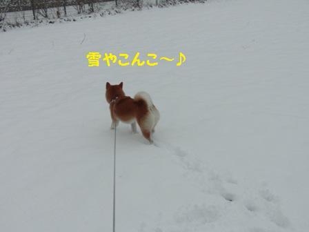 雪やこんこ