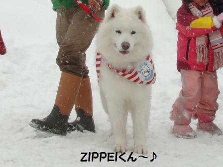 ZIPPEI