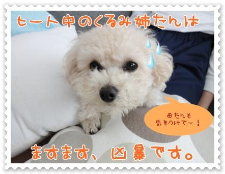 a10_20120304154733.jpg