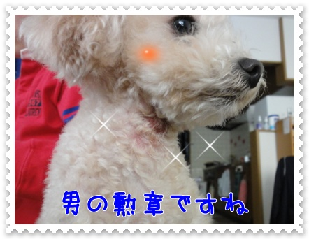 a12_20120214204645.jpg