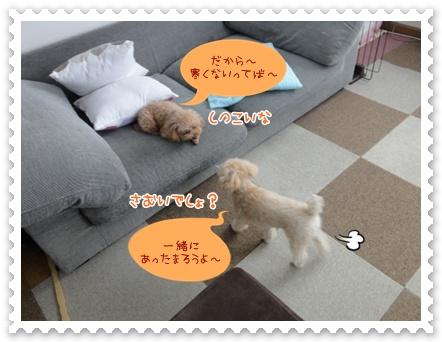 a17_20120313212701.jpg