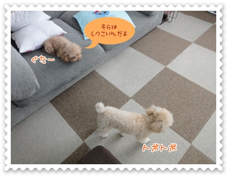 a19_20120313212752.jpg
