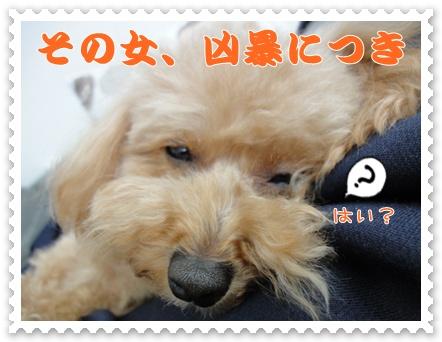 a4_20120214204534.jpg