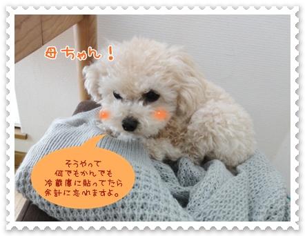a5_20120315192436.jpg