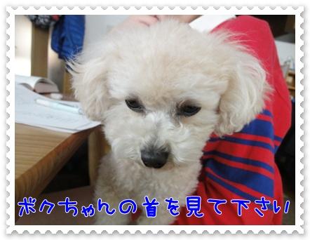 a8_20120214204646.jpg