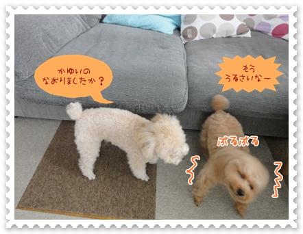 b12_20120307160107.jpg