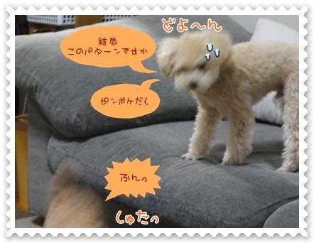 b16_20120325233705.jpg