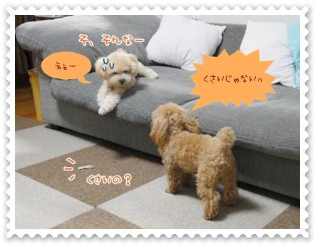 b6_20120325233608.jpg