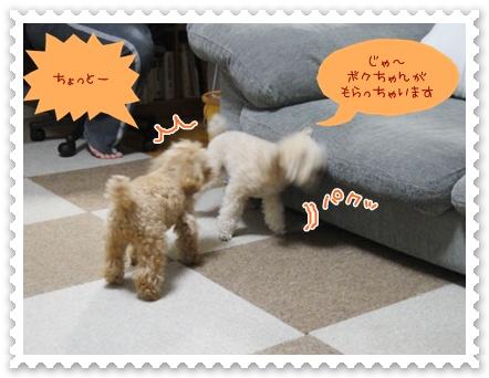 b8_20120325233608.jpg