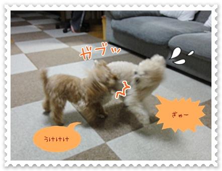 c7_20120331123113.jpg