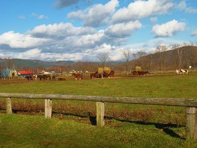 立冬の日差し楽しむ馬たち