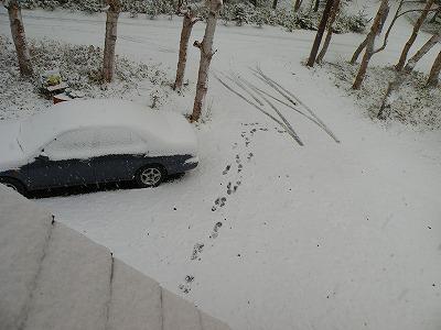 2011年秋初積雪