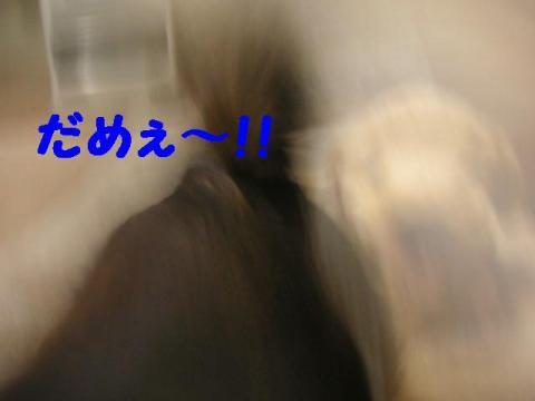 pure12.jpg
