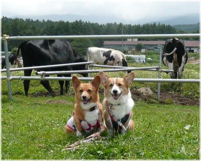 牛と一緒に♪