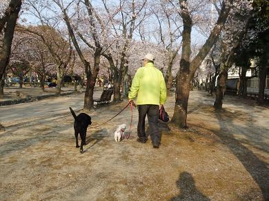 トビィも桜見てるかな・・・