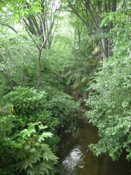玉川上水 - 江戸へと引かれた飲み水の道