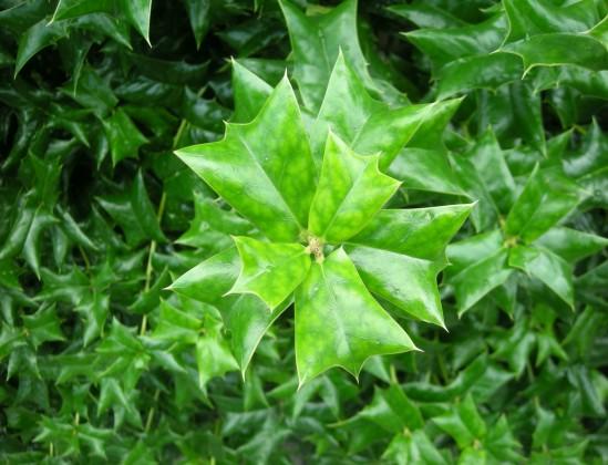 ムササビの葉っぱb
