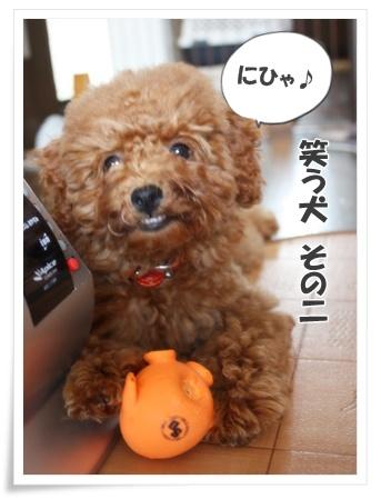 笑う犬 その2