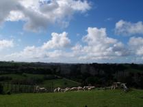 Farms view (2)