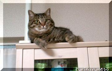 食器棚の上のレン2