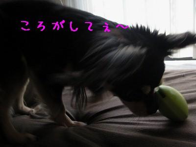 画像-0220
