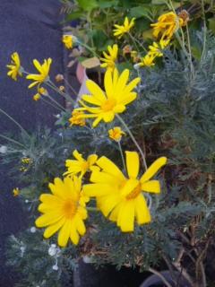 散歩途中のイエローの花